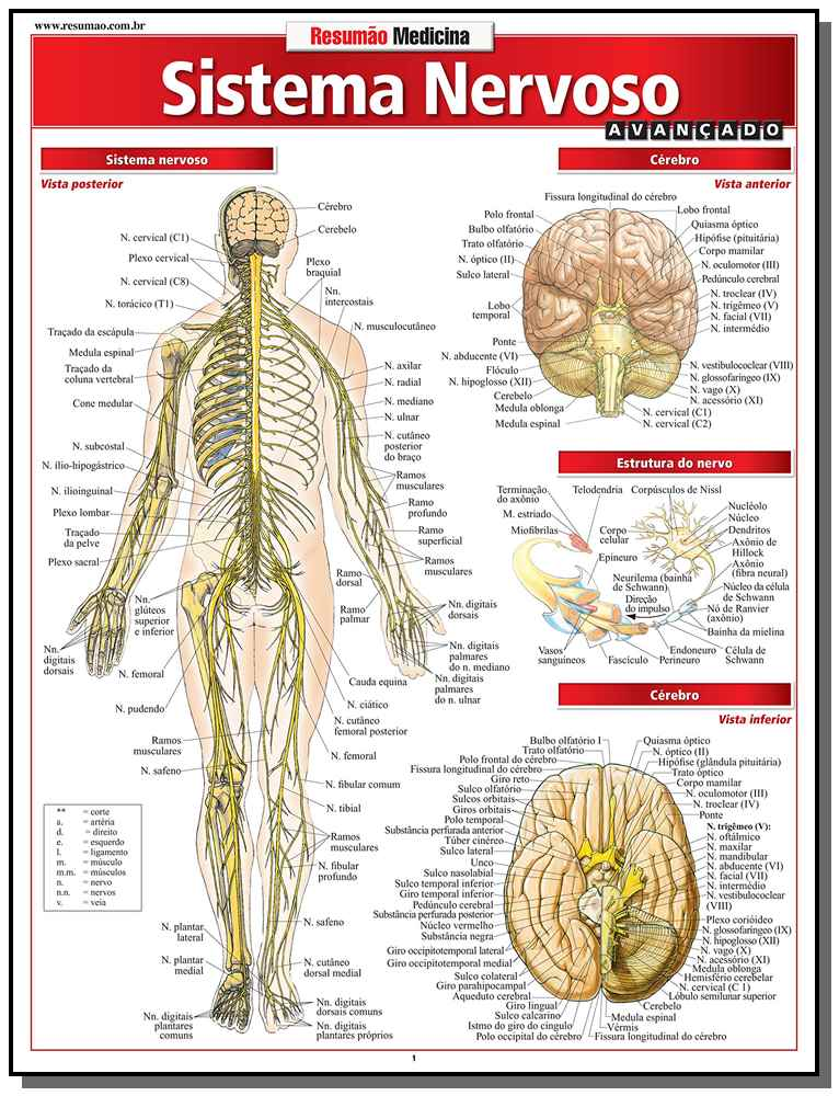 Resumao Medicina - Sistema Nervoso Avancado